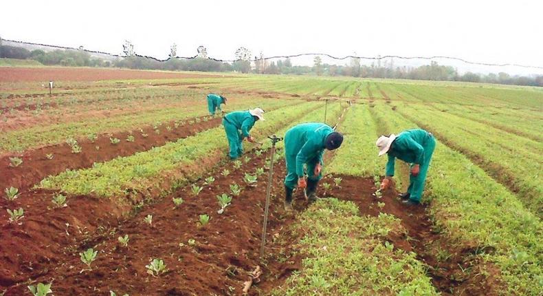 Planting for Food & Jobs fertilizer worth GH¢600,000 stolen