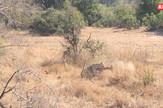 AP_leopard_i_antilopa_vesti_blic_unsafe