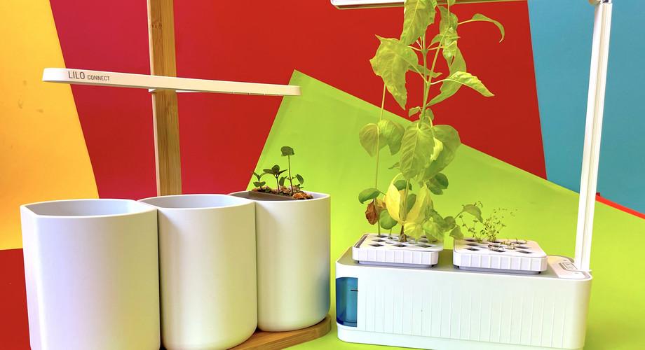 Indoor-Garten