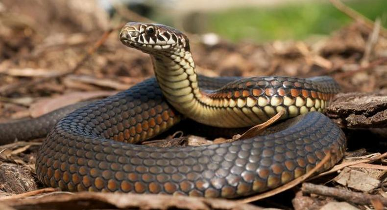 No fewer than 38 people have died from snake bites in Zimbabwe.
