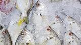Nie kupuj tych ryb. To parszywe gatunki