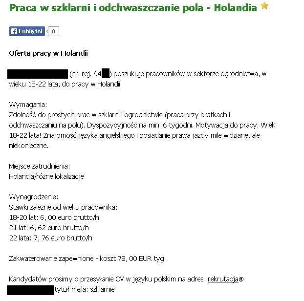 Tak oszukują Polaków wyjeżdżających do Holandii - Wiadomości