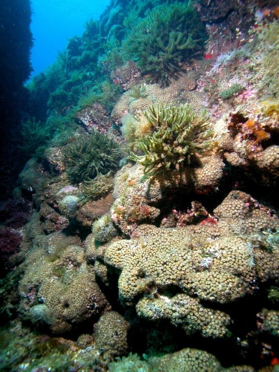 The discovery means there is a narrow window of opoprtunity to prevent coral reefs from going extinct as a result of climate change