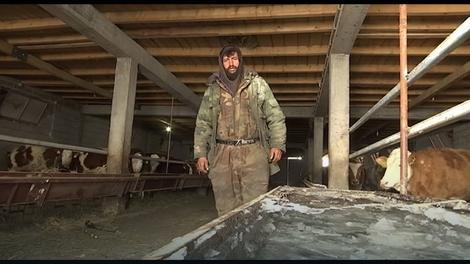 Radnik farme Zarif Kurtanović muku muči da obezbedi vodu za krave i junad