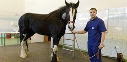 Przychodzi koń do doktora...