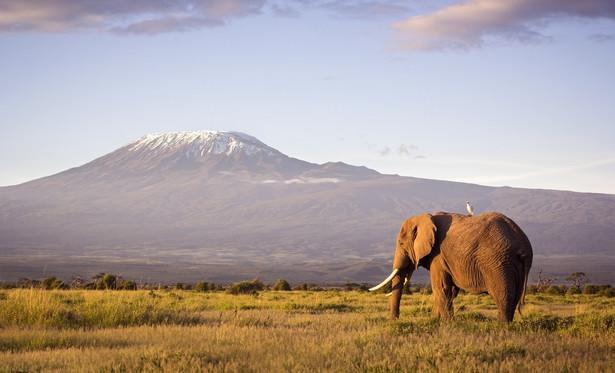 """Na safari do Kenii Zima to najlepszy czas na podróż do Kenii. Możemy być pewni, że nic nie zakłóci naszej podróży i będziemy mogli bez problemu poruszać się po całym kraju. I choć kenijskie wybrzeże kusi białym piaskiem i wspaniałą rafą koralową, najciekawsza jest afrykańska odsłona tego kraju. Kenia nie bez powodu nazywana jest Afryką w pigułce. Żyją tu niemal wszystkie gatunki zwierząt z całego kontynentu, a przyroda to o wiele więcej niż sawanna i pustynie kojarzone z tą częścią świata. Jeżeli to właśnie to skłoniło Was do wyprawy do Kenii, najlepiej wybrać się do jednego z rezerwatów. Masai Mara to jedno z ostatnich miejsc na Ziemi, w którym dzikie zwierzęta od tysięcy lat żyją obok siebie w niezaburzonej równowadze. – To idealne miejsce, by przy pomocy aparatu fotograficznego """"polować"""" na lwy lub gepardy leżące pod drzewami, wędrujące stada słoni, zebry, żyrafy, antylopy i bawoły, lub leniwie wypoczywające nad wodą hipopotamy a nawet na czarne nosorożce. Unikalna różnorodność tego miejsca, to właśnie główny powód, dzięki któremu safari w Kenii jest naprawdę niezapomnianą podróżą – twierdzi Piotr Wilk z biura podróży Rainbow. Jednym z mniej oczywistych kierunków wypraw jest dzikie pasmo górskie Aberadare, z Mount Kenya na czele. To drugi, po Kilimandżaro, najwyższy szczyt w całej Afryce (5199 m n.p.m.), od którego kraj przyjął swoją nazwę. Choć wiele tutejszych szczytów przez cały rok pokrywa lód i śnieg, w niższych partiach, króluje zieleń. Tak jest na przykład w Parku Narodowym Aberdare – zielonej krainie gór i wodospadów, który znajdziecie w środkowo-zachodniej Kenii. Malownicze doliny pełne są wodospadów i krystalicznie czystych potoków, w których można złowić wspaniałego pstrąga! Do tego lasy tropikalne i lasy bambusowe – wszystko to składa się na unikalny mikroklimat, uznawany za jeden z najlepszych na świecie, stanowiący schronienie dla wielu gatunków zwierząt, takich jak lamparty, guźce czy czarne nosorożce. Pełno jest także ciekawskich małp. To oczywiśc"""