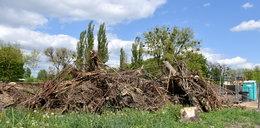 Skandal! Wytną 400 drzew na małym osiedlu