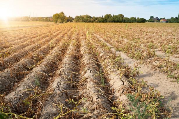 Wilgotniejszy 2021 r. ucieszyłby rolników, ale także inne branże korzystające z dużych ilości wody, np. energetykę