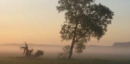 Uwaga na mgły. Ostrzeżenia IMGW