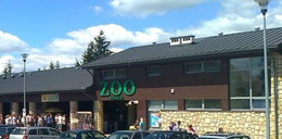 Horror w zamojskim Zoo! Kobieta chciała sobie obciąć głowę