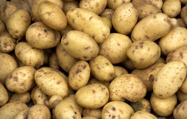 Z przedstawionego stanu faktycznego wynika, że zakupione produkty rolne (ziemniaki) stanowią dla przedsiębiorcy towary handlowe, a zatem poniesione na ich nabycie wydatki stanowią dla niego koszt uzyskania przychodów