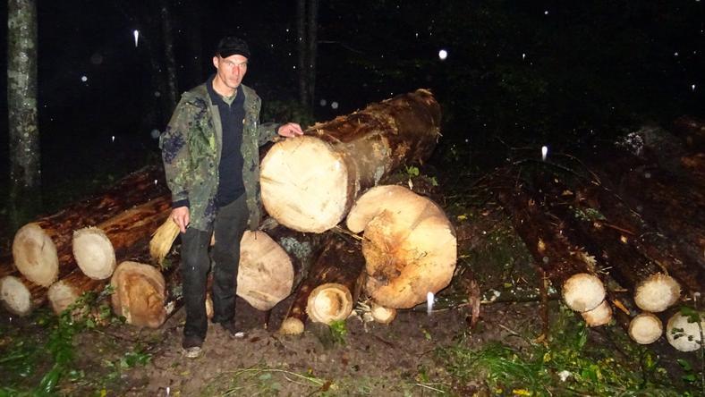 W nocy aktywiści dokumentowali wycinkę w Puszczy Białowieskiej