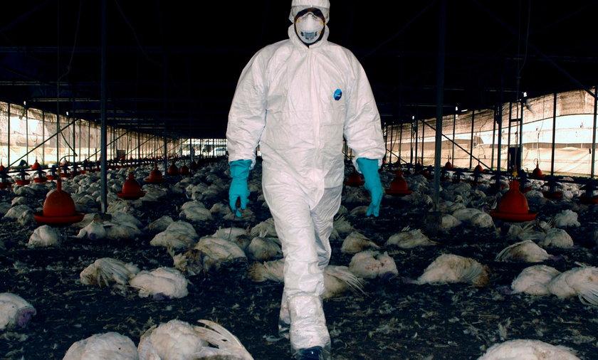 Pierwszy przypadek zakażenia człowieka ptasią grypą H10N3.