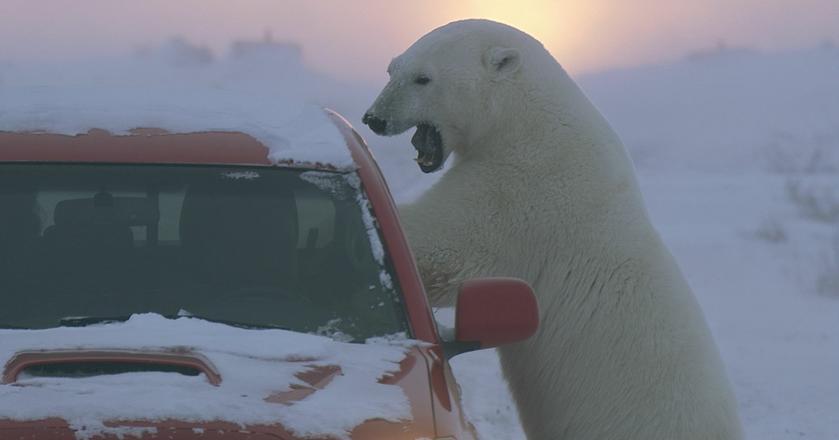 Niedźwiedzie polarne będą bohaterami jednej z produkcji Polsat Doku