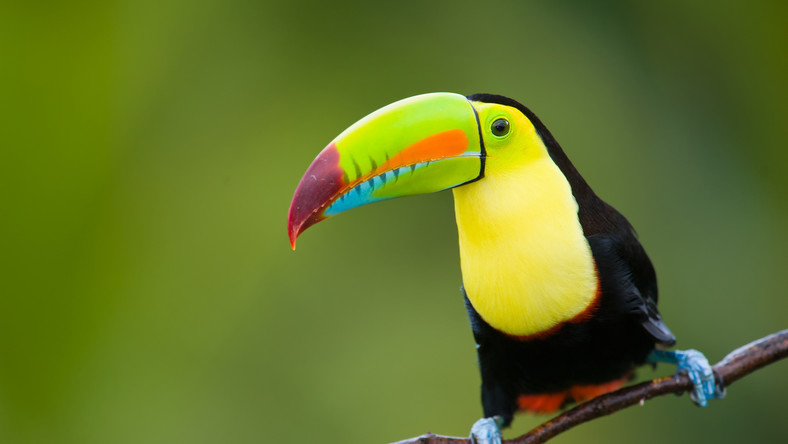 Przepiękne tropikalne lasy Kostaryki wypełnione zwierzętami, jakie na co dzień można oglądać jedynie w lepszych ogrodach zoologicznych, przyciągają coraz więcej turystów. Dlatego obrońcy kostarykańskiej przyrody zaczynają coraz głośniej wyrażać obawy, czy nie zaszkodzi to temu znakomitemu ekosystemowi