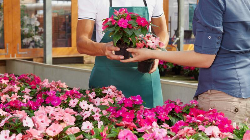 kupowanie kwiatów