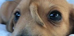 Internet oszalał na punkcie tego psiaka! Wszyscy chcą go adoptować