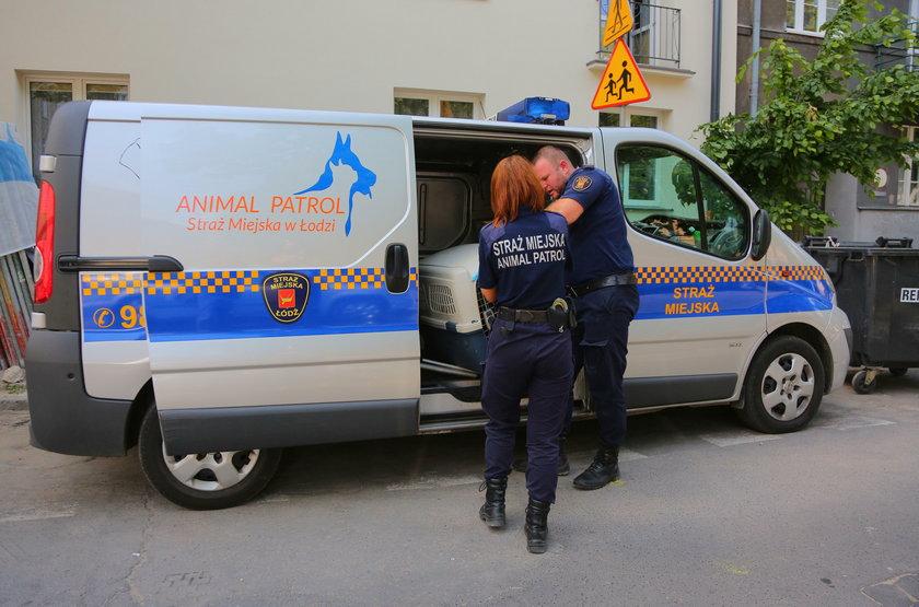 Strażnicy miejscy z Animal Patrolu uratowali zagłodzone psy z kamienicy przy ul. Zacisze