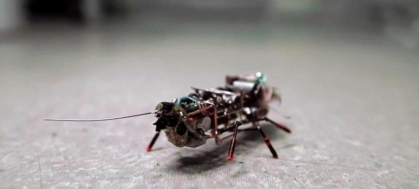 Karaluch cyborg