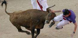 Byki napadają