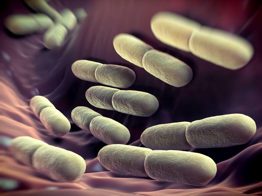 Bakterie jelitowe chronią nasz organizm przed zakażeniem i wynikającymi z nich chorobami