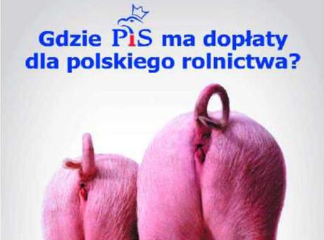 Kaczyński: Zaszkodziły nam świńskie zady