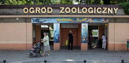 Festyn przyrodniczy w Starym Zoo