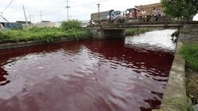 """Tajemnicza """"rzeka krwi"""" przepłynęła przez miasto"""