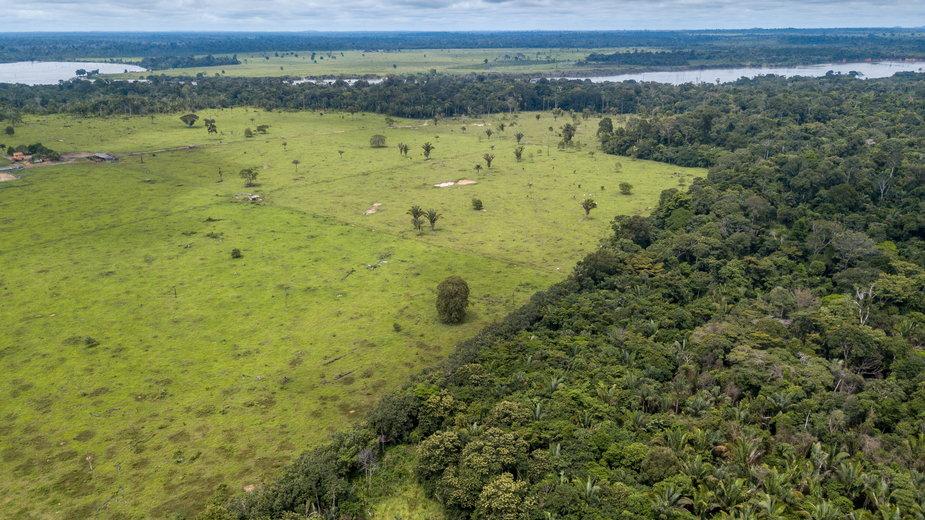 Puszcza Amazońska jest systematycznie wycinana. Teraz działki są nielegalnie sprzedawane przez Facebooku