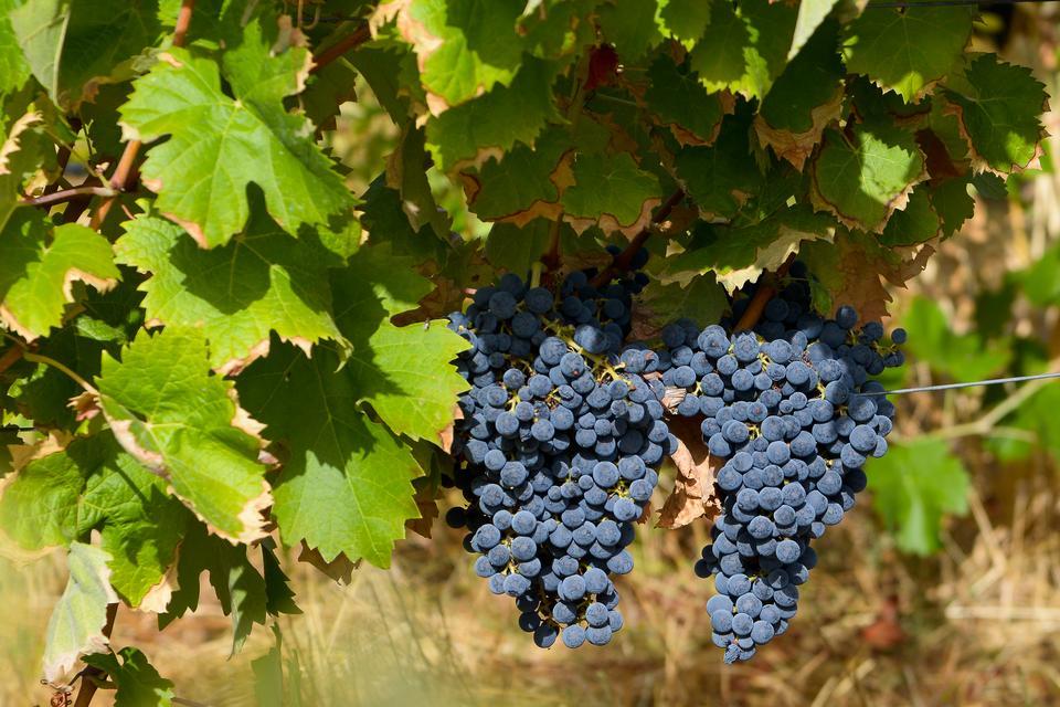 Herdade do Esporão - jedna z wielu winnic w regionie Alentejo słynącym z wyśmienitych win