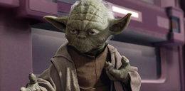 Pierwszy Yoda w Polsce
