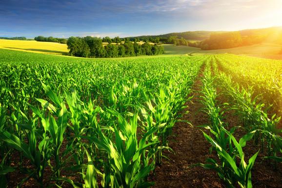 U našoj zemlji posluje između 6.000 i 7.000 proizvođača organske hrane