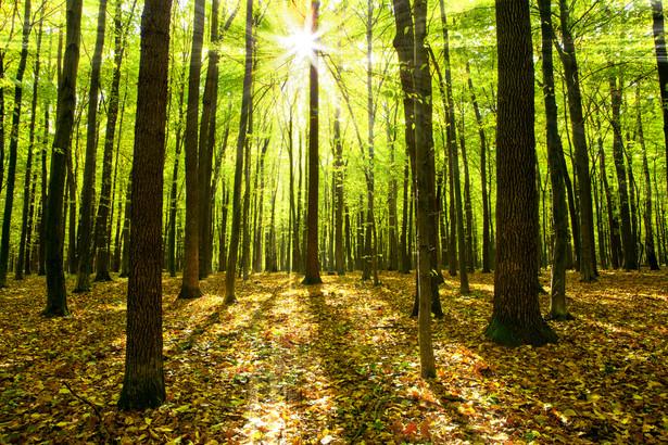 Obecnie jedynie dla 71,5 proc. prywatnych lasów sporządzone są uproszczone plany ich urządzenia.