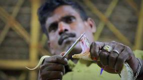 Łowcy węży z indyjskiego ludu Irula