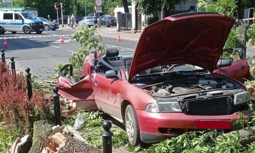 W Żywcu na samochód spadło drzewo.