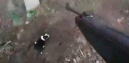 15-latek rozstrzelał szczeniaczki i nagrał egzekucję. Mówił, że jest satanistą...