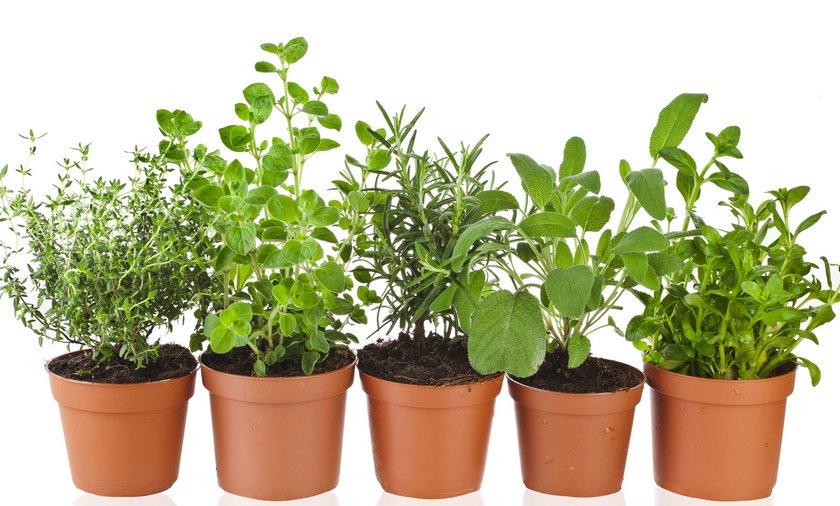 Jak uratować zioła z supermarketów? Są na to sposoby