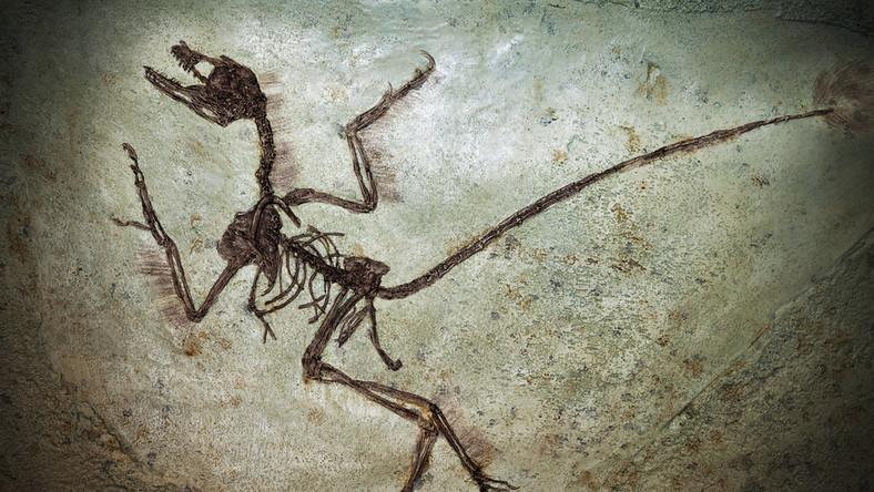wykopaliska szczątki kości dinozaur