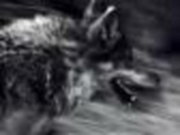 "Christoph Ransmayr, Martin Pollack ""Pogromca wilków"""