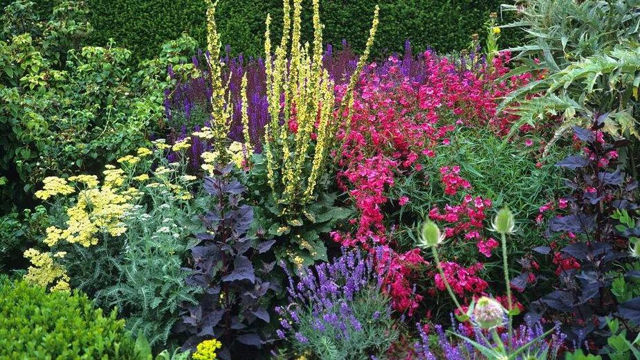 Rośliny czują się lepiej w grupie! (fot. Gardens by Design / Shutterstock)
