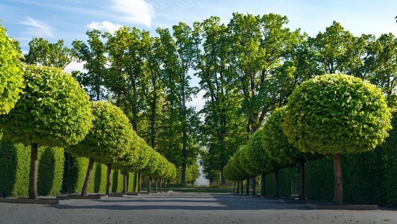Ozdobne Drzewa Do Ogrodu Najpopularniejsze Gatunki Dom