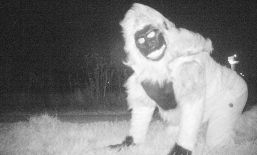 Policjanci zainstalowali kamery, żeby namierzyć groźną pumę. Nagranie ich zaskoczyło