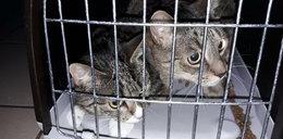 Twierdził, że znalazł porzucone koty. Prawda była dużo gorsza