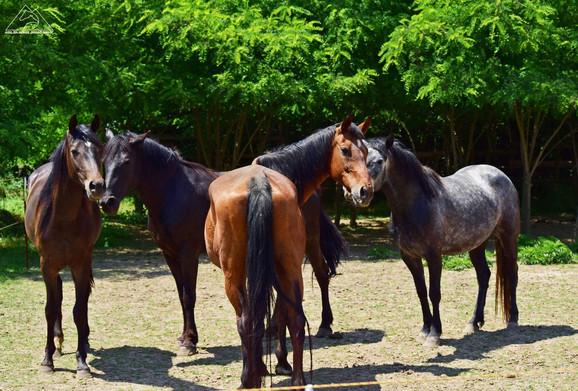 Ovde su našli ljubav i brigu: Azil za konje kod Lapova