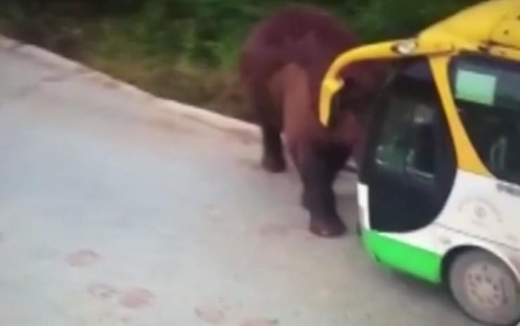 Slon protiv autobusa
