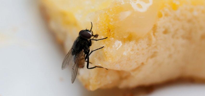 To naprawdę wstrętne! Te choroby przenoszą muchy...