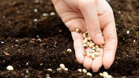 Gdzie kupić nasiona owoców i warzyw do ogrodu?