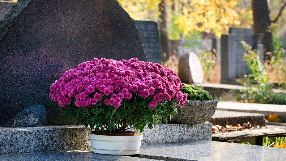 W jednej wiązance na Wszystkich Świętych możemy łączyć wiele rodzajów i kolorów kwiatów