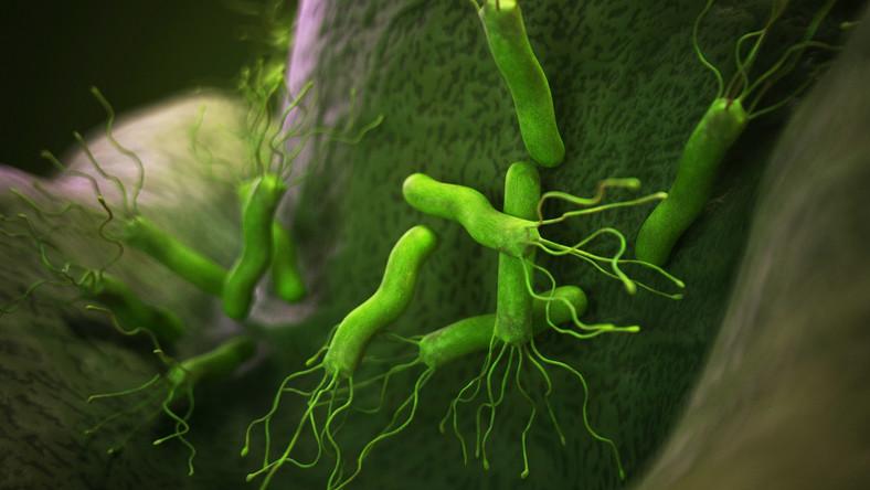 Helicobacter pyloris