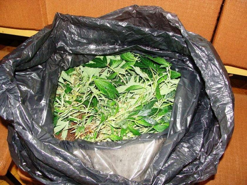 Marihuana rosła w wagonach kolejowych